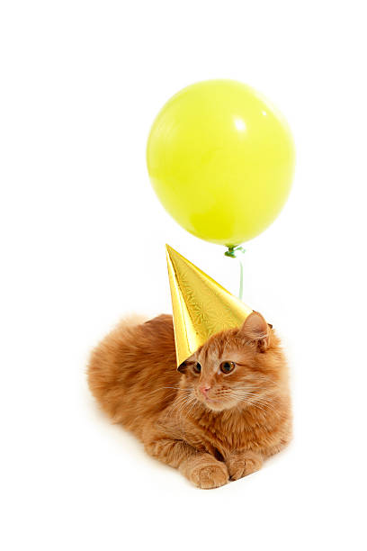 Kitten balloon.jpg